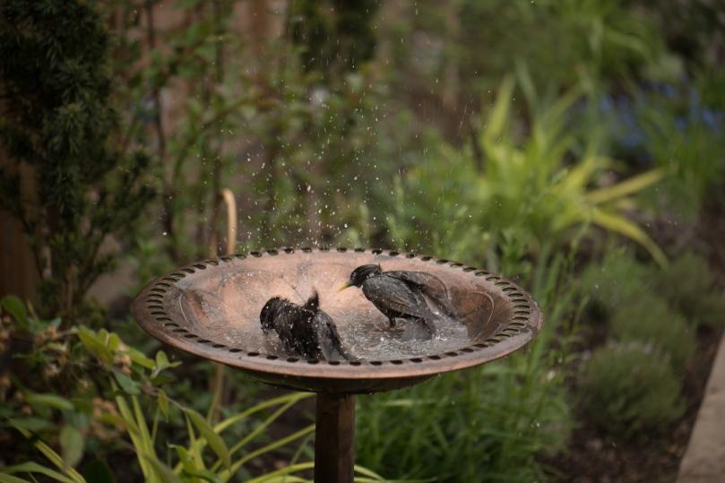 birdbath-1