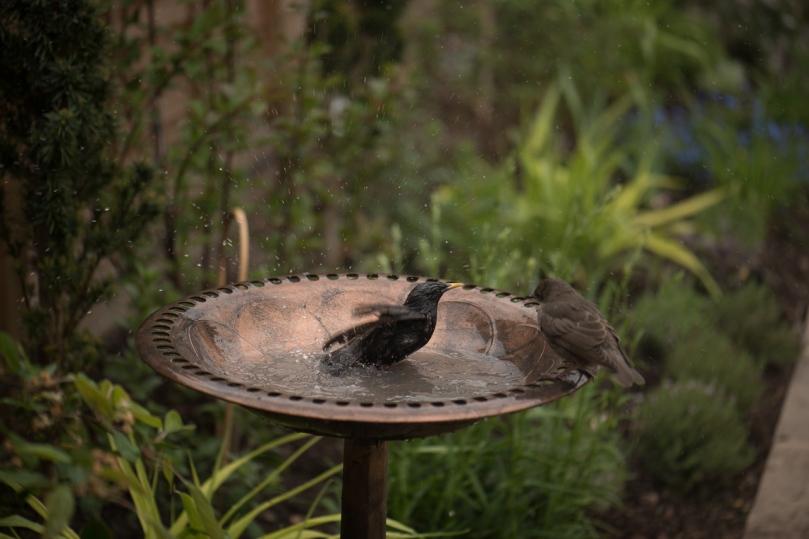 birdbath-2