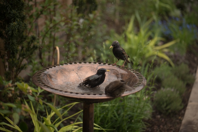 birdbath-3