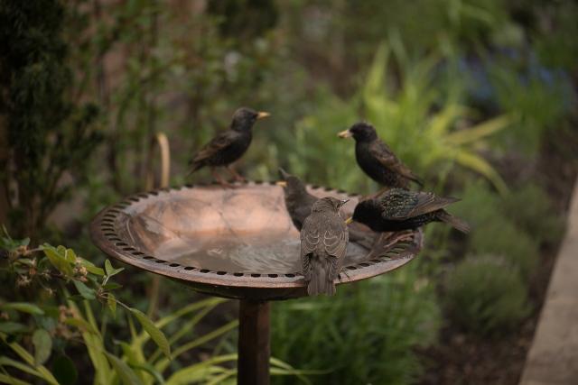 birdbath-4
