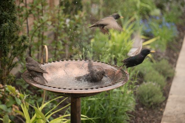birdbath-5