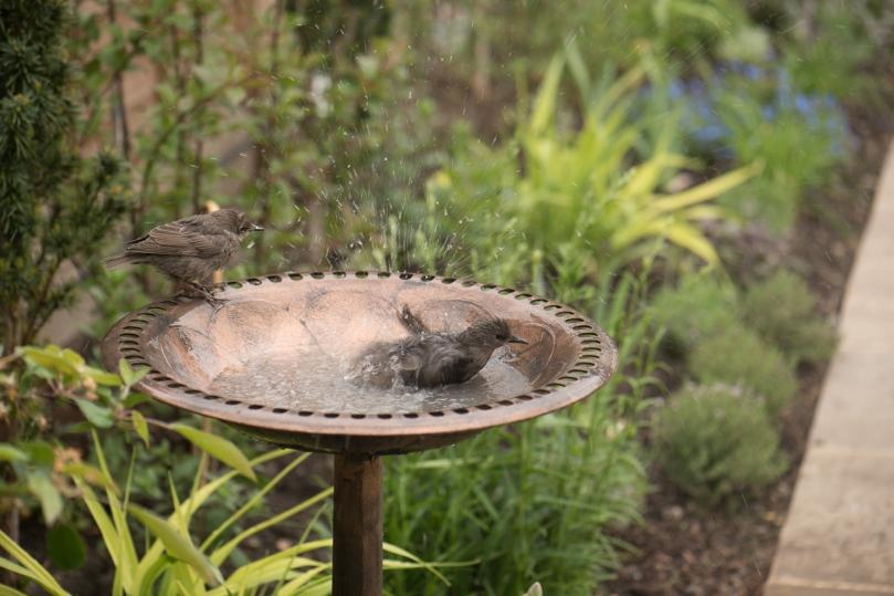 birdbath-6