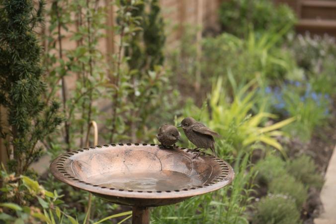 birdbath-7