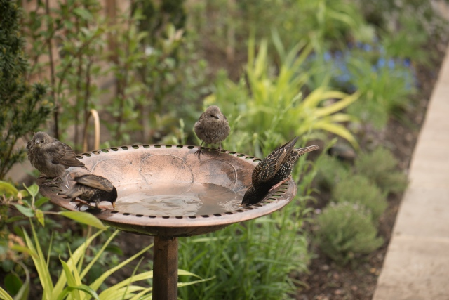 birdbath-8