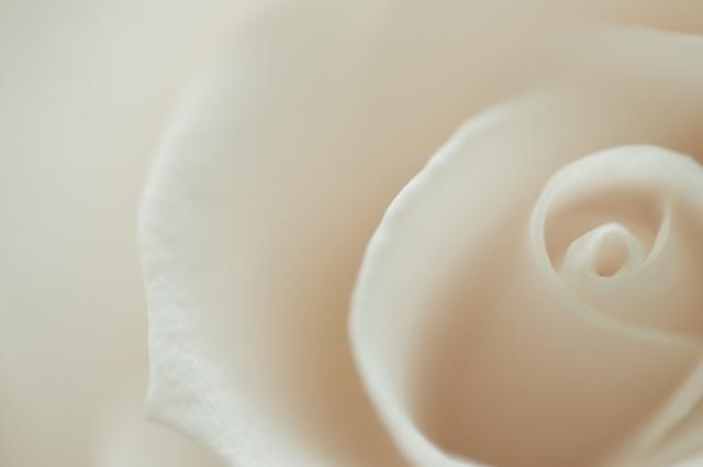 Rose-1-3