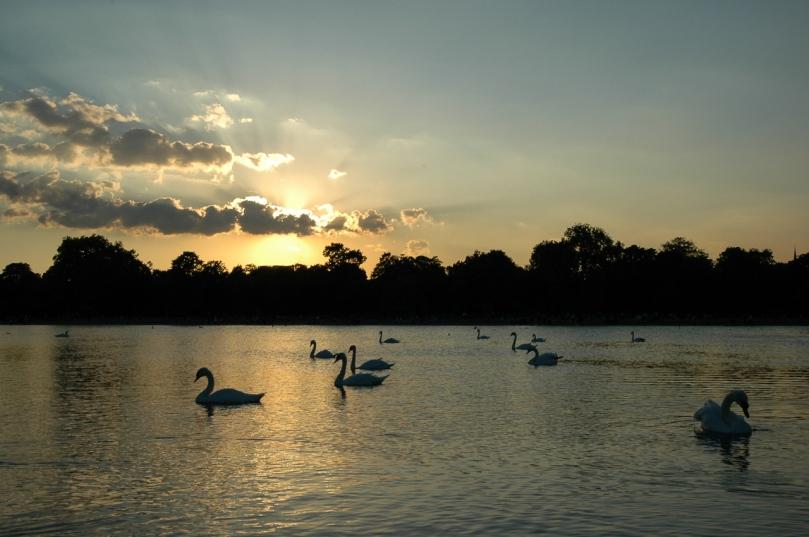 swan lake-1
