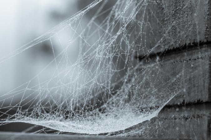 cobweb-2