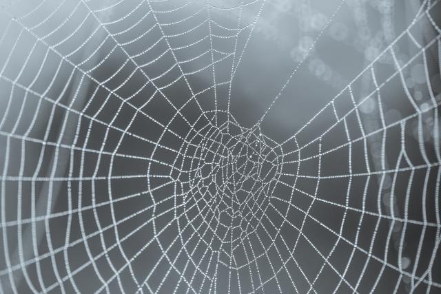 cobweb-3